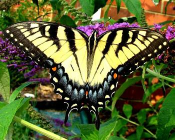 "Lets look at some ""butterflies"" and other insects-2287038760067110760kxqiid_fs_2.jpg"