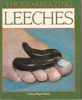 """Lets look at some """"butterflies"""" and other insects-leech1a.jpg"""