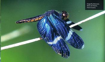 "Lets look at some ""butterflies"" and other insects-thomas-marent-rainforest10.jpg"