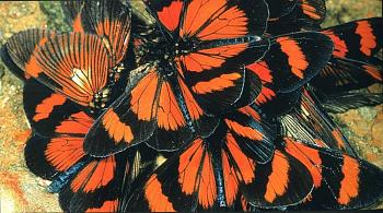 "Lets look at some ""butterflies"" and other insects-thomas-marent-rainforest41.jpg"