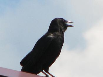 """How about your """"bird"""" photos.....here's a few of mine.-img_5954.jpg"""