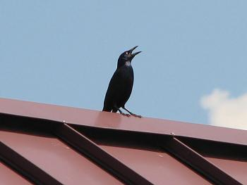 """How about your """"bird"""" photos.....here's a few of mine.-img_5957.jpg"""