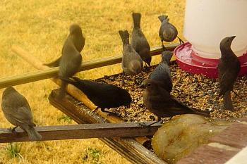 """How about your """"bird"""" photos.....here's a few of mine.-dsc04484_fixed-3-.jpg"""