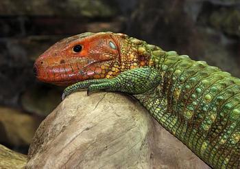 Reptilians & snakes-6082.jpg