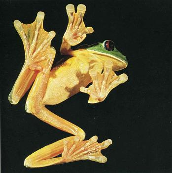 Reptilians & snakes-heather-angel1.jpg