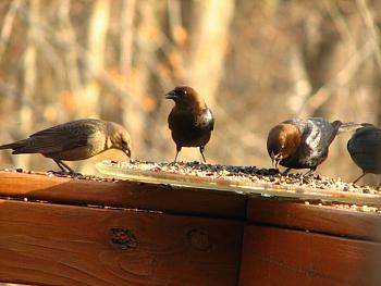 "How about your ""bird"" photos.....here's a few of mine.-img_1157.jpg"