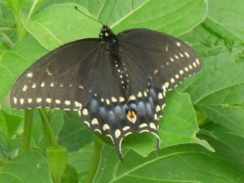 """Lets look at some """"butterflies"""" and other insects-bug2.jpg"""