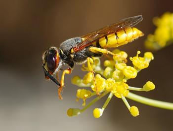 "Lets look at some ""butterflies"" and other insects-wasp_august_2007-12.jpg"