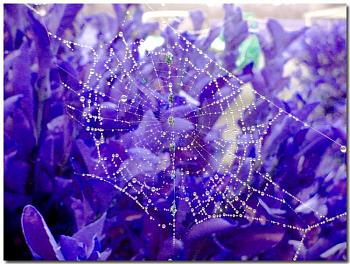 "Lets look at some ""butterflies"" and other insects-spider-web-morning-dew.jpg"