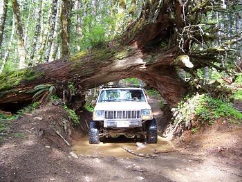 wheelin??browns camp??-cedar-tree-front.jpg