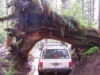 wheelin??browns camp??-cedar-tree-back.jpg