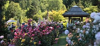 International Rose Test Gardens-rose-gardens.jpg