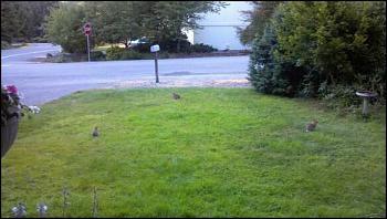 Rabbits!-bunnies.jpeg
