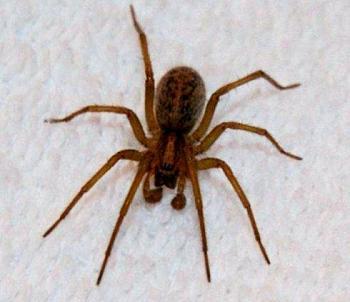 Spider Season is Back-hobo.jpg