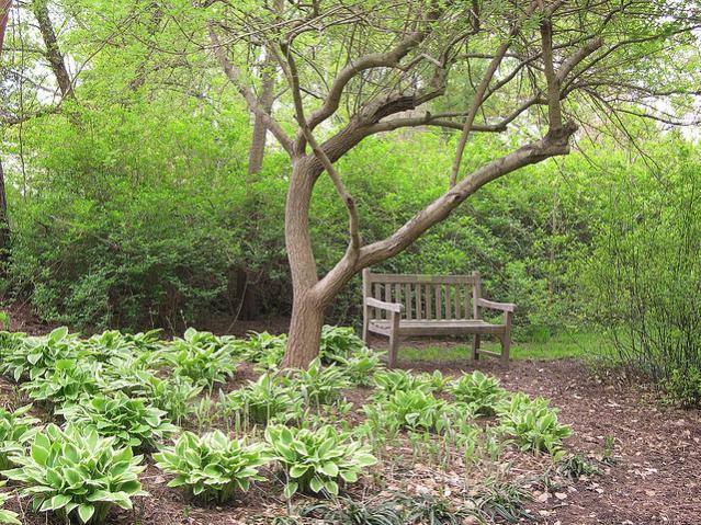 Spartanburg South Carolina Hatcher Garden And Woodland Preserve Photo Picture Image