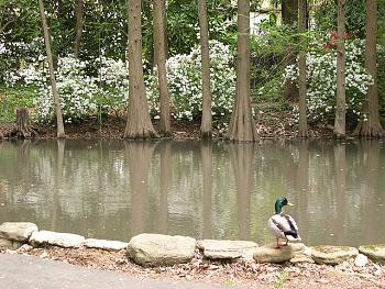 Hatcher Garden And Woodland Preserve Spartanburg South Carolina