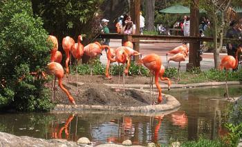 Riverbanks Zoo And Botanical Garden Columbia South Carolina