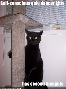 Pole Dancing-pole-dancer-cat.jpg