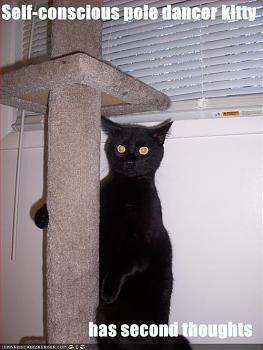 Pole Dancing-pole-dancer-cat.jpg