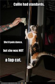 Pole Dancing-lapcat.jpg