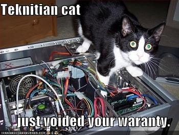 6 Reasons The Guy Who's Fixing Your Computer Hates You-technician-cat.jpg