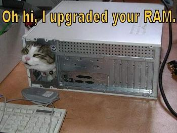 6 Reasons The Guy Who's Fixing Your Computer Hates You-oh-hi-i-upgraded-your-ram-lolcat%5B3%5D.jpg