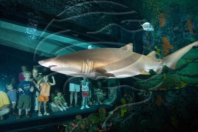 Chattanooga Tennessee Tennessee Aquarium Photo Picture