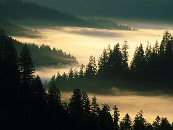 Fire in Texas-indian_creek_siuslaw_national_forest_oregon.jpg