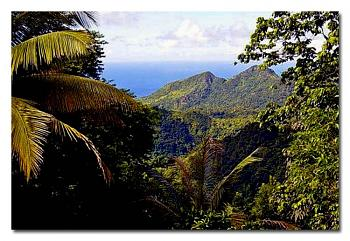 "A few photos of the ""Island of St. Lucia""...West Indies..a great place to visit.-c65dc09b2381887d7799fc9bf69d8927-0-copy.jpg"