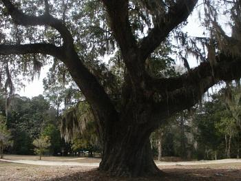 One big beautiful tree!-p220.jpg
