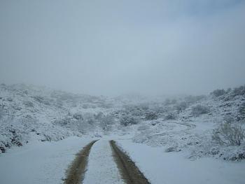 Snow hunting...-20110227_snowday_56.jpg