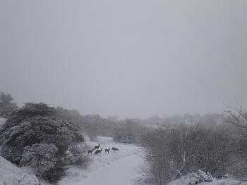 Snow hunting...-20110227_snowday_68.jpg