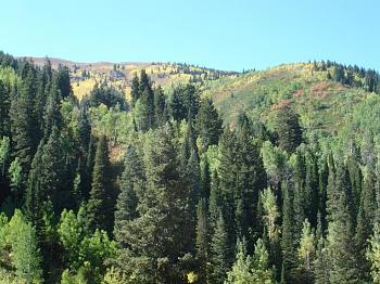 ashley national forest...-bakside-bountiful-peak.jpg