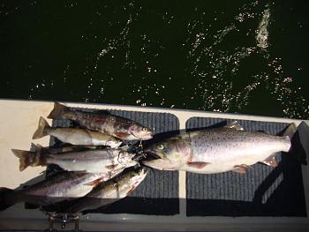 Fishing Pics-dsc00405.jpg
