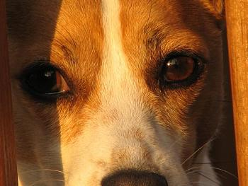 Love Your dog? Why is He/She so special?-look-into-mollys-eyes.jpg