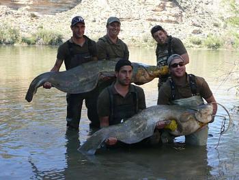 Blue catfish catch a Virginia record-17.jpg