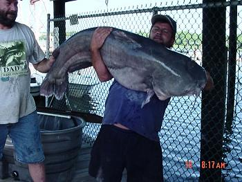 Blue catfish catch a Virginia record-blue-catfish-record2.jpg