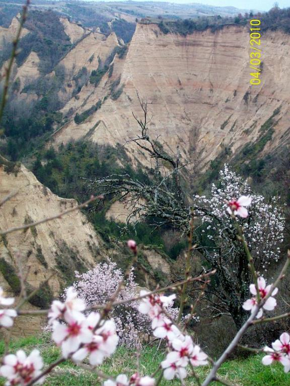 Near Melnik Town - almond trees are flowering