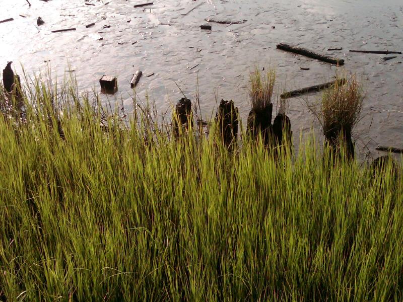 Cape Fear River Banks