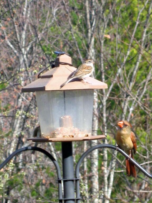 Our Bird Feeder