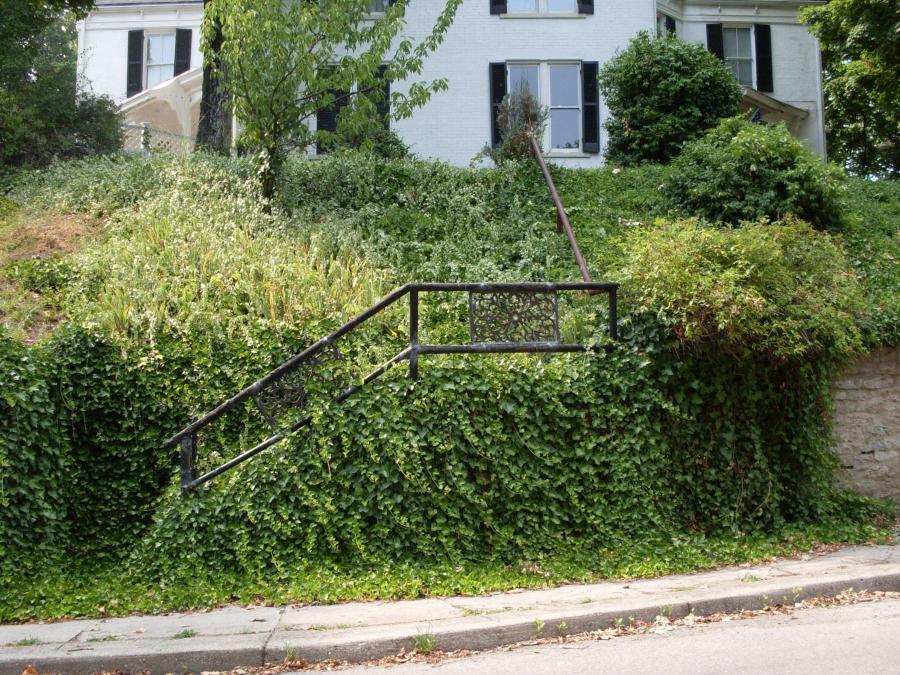 Cincinnati--Sayler Park--overgrown steps