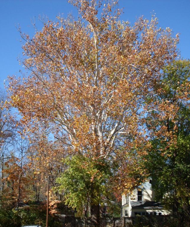 Cincinnati--Sayler Park--sycamore